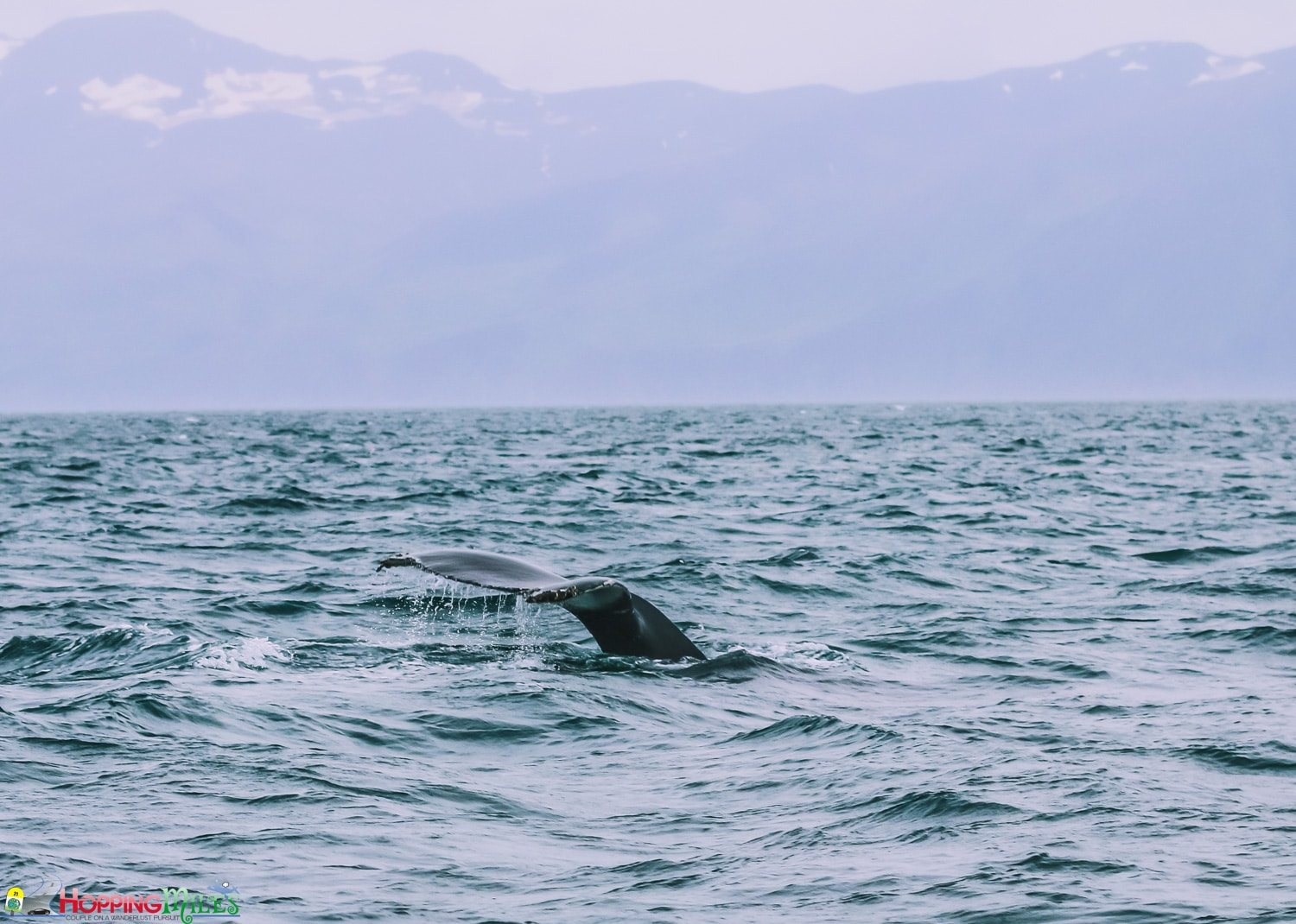 Husavik Whale watching with North Sailing